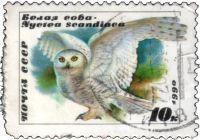 Белая сова 1990